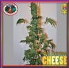 Big Buddha Cheese Auto Female 5 Marijuana Seeds